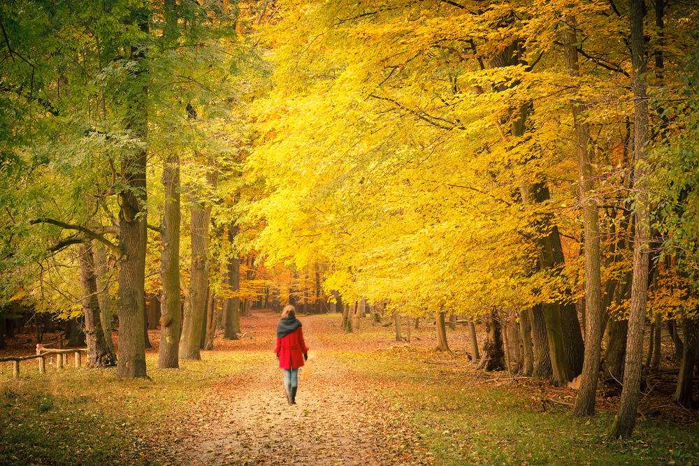 HOW BEING OUTSIDE MAKES YOU HEALTHIER: The Benefits of Ecotherapy